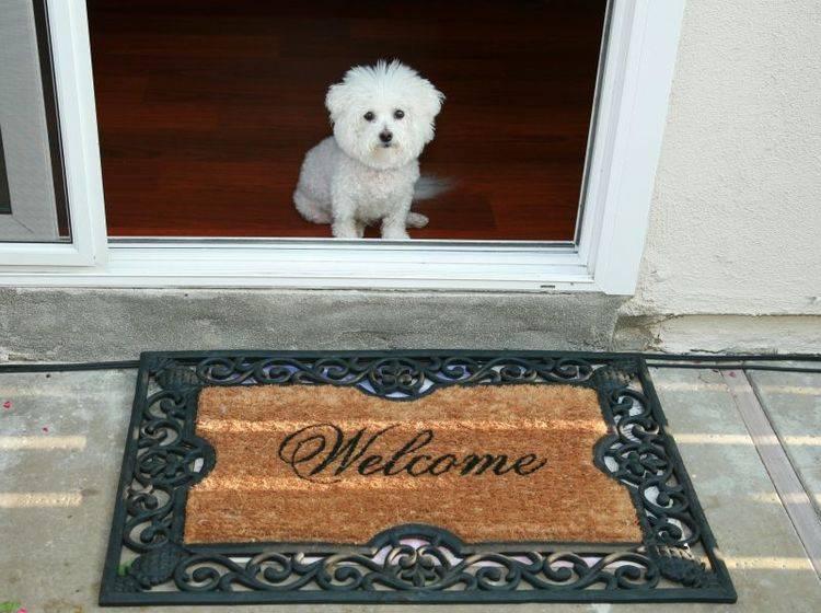 Viel Zeit und Geduld sind wichtig, wen ein neuer Hund einzieht – Bild: Shutterstock / mikeledray