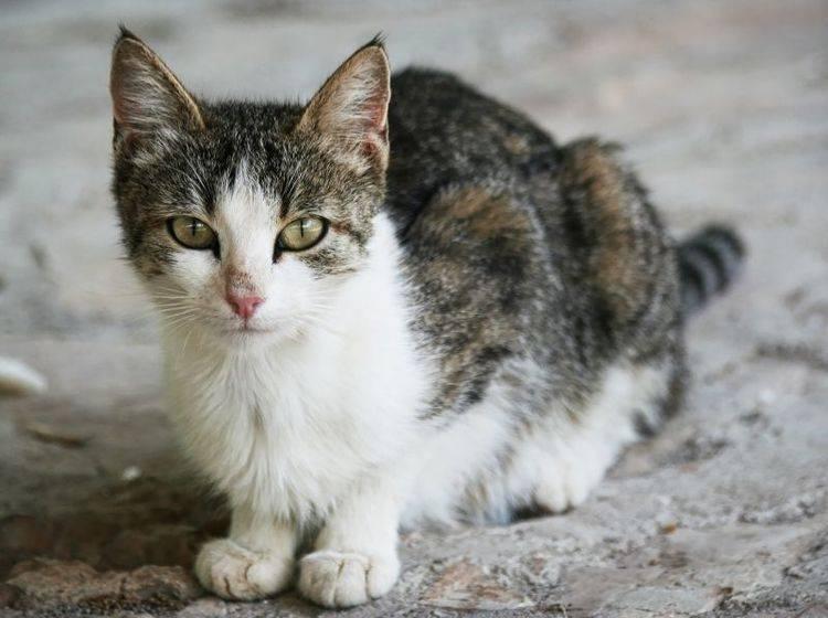 Liebe, Wärme und gesunde Ernährung helfen, um die Katze aufzupäppeln – Bild: Shutterstock / Lenar Musin