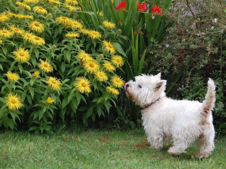 Zeit im Garten zu verbringen, das ist schön! – Bild: Shutterstock / BENCHA STEWART