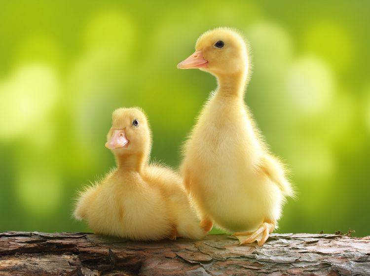 """Na, was ist denn da hinten los?"" – Bild: Shutterstock / Valentina Razumova"