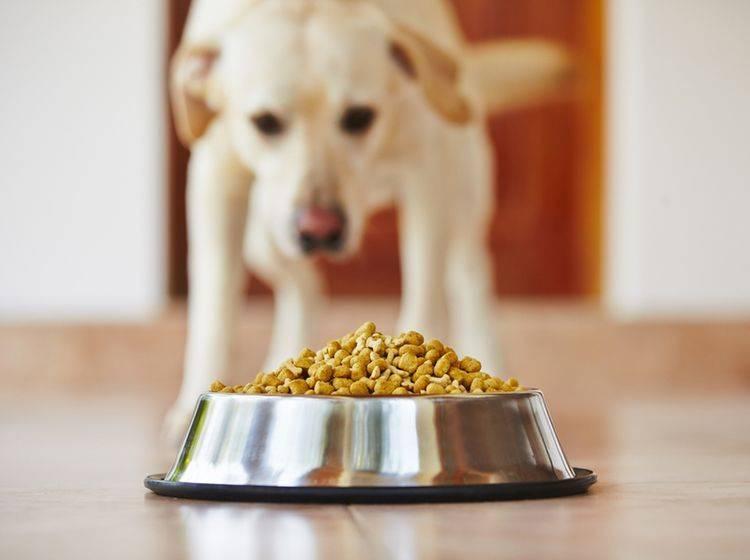 Sowohl in Trocken- als auch in Feuchtfutter können sich unter Umständen Futtermilben verstecken – Shutterstock / Jaromir Chalabala