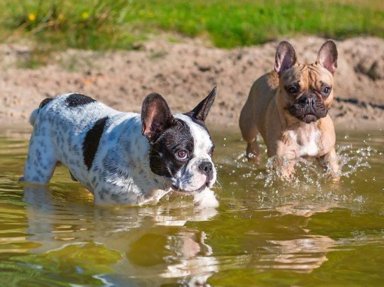 Zwischenstop am See beim Hundespaziergang: Ein Vergnügen für Fellnasen – Bild: Shutterstock / Patryk Kosmider