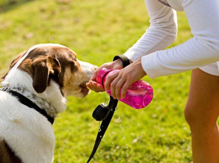 Nicht vergessen beim Nordic Walking: Die Wasserflasche – Bild: Shutterstock / Sean Locke Photography