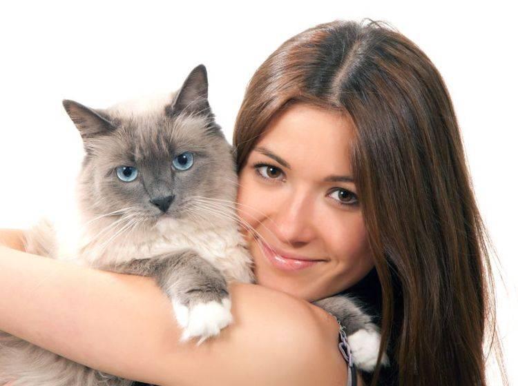 Dank Chip sind Katzen eindeutig identifizierbar – Bild: Shutterstock / Dmitry Lobanov