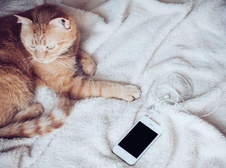 Lade- oder Kopfhörerkabel: Für viele Katzen eine Verlockung – Bild: Shutterstock / Dasha Minaieva