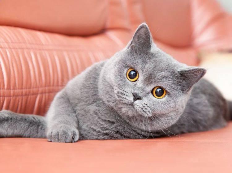 Krallenwetzen: Bitte nicht auf Ledermöbeln! – Bild: Shutterstock / Olesya Kuznetsova