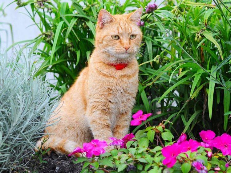 GPS-Halsbänder und Systeme um die Katze zu orten – Bild: Shutterstock / Zanna Holstova