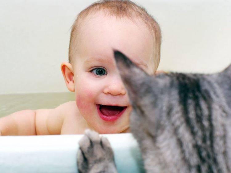 Ein prüfender Blick auf das neue Familienmitglied: Diese Katze macht es vor – Bild: Shutterstock / Timofeyev Alexander