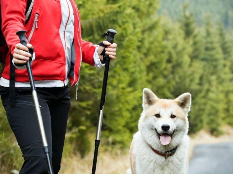 Frische Luft und Bewegung: Nordic Walking macht Spaß – Bild: Shutterstock / Blazej Lyjak