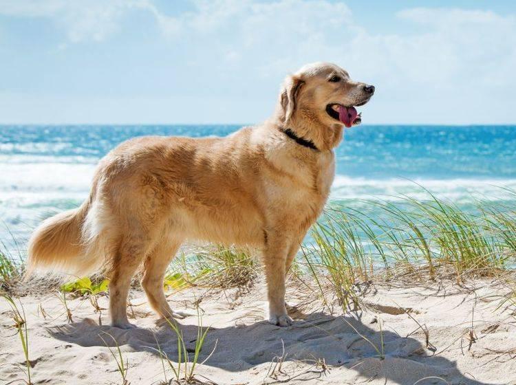 Mit einer Reisekrankenversicherung können Sie sorglos in den Urlaub starten – Bild: Shutterstock / Martin Valigursky