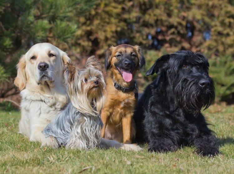 Gar nicht so leicht: Den passenden Namen für einen Hund auswählen – Bild: Shutterstock / Frank11