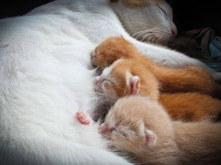 Die säugende Katze braucht spezielles Futter – Bild: Shutterstock / Grey Carnation