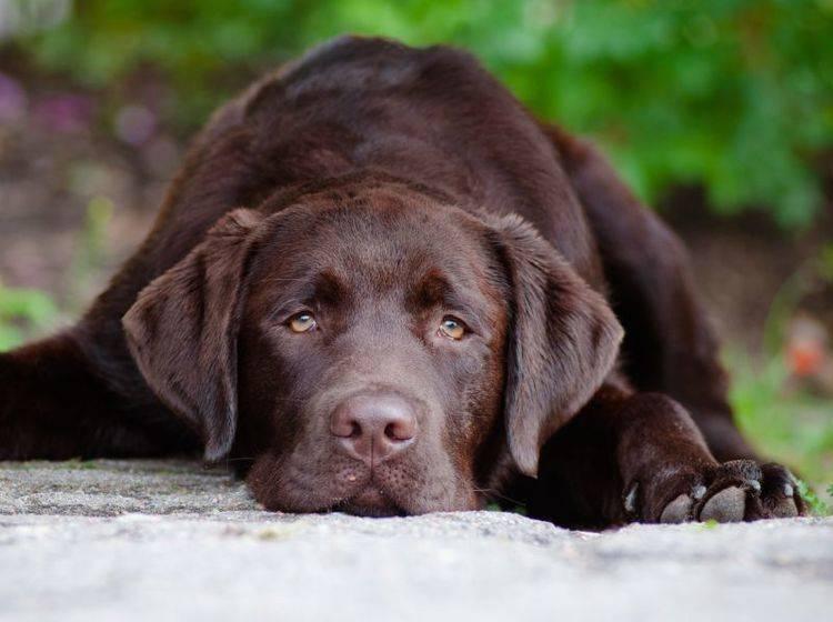 Bei Verdacht auf Leberinsuffizienz verschafft ein Tierarzt Gewissheit – Shutterstock / otsphoto