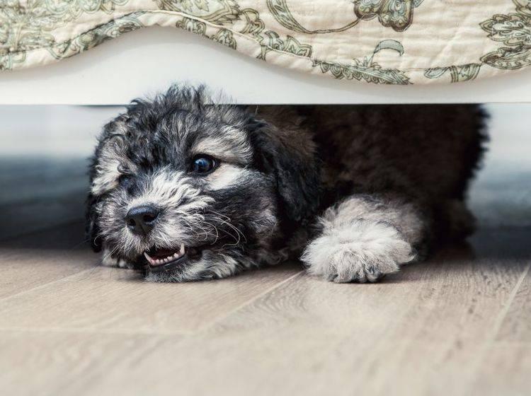 Beobachten Sie Ihren Hund genau, um Stresssignale schnell zu erkennen – Shutterstock / Soloviova Liudmyla