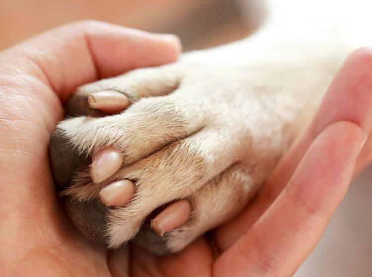 Damit sie gesund bleiben, müssen Hundekrallen regelmäßig gekürzt werden – Bild: Shutterstock / Melpomene