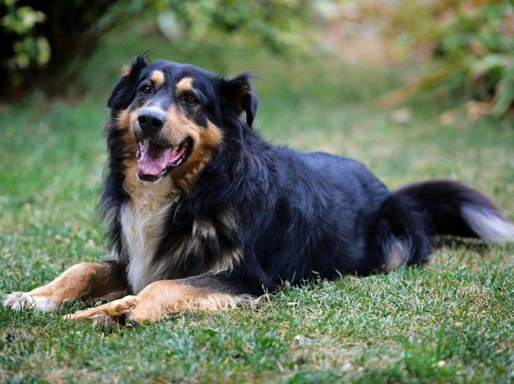 Einen Hund kastrieren zu lassen hat Vor- und Nachteile – Bild: Shutterstock / Zsolt Biczo