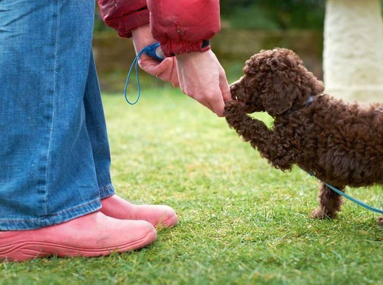 """Befolgt der Hund das Kommando """"Komm"""" gibt es eine Belohnung – Shutterstock / Duncan Andison"""