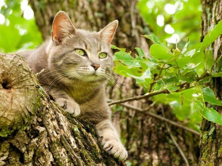 Mit ein paar Vorkehrungen können Sie Jungvögel so gut es geht vor Katzen schützen – Shutterstock / Sari ONeal