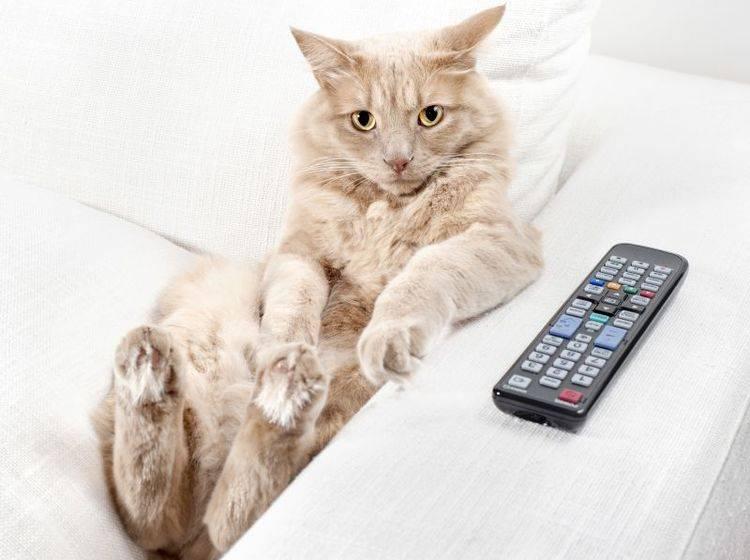 Passen Sie auf, dass Ihre Katze nach der Kastration nicht nur auf der faulen Haut liegt – Bild: Shutterstock / Stefano Garau