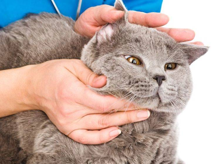 Sind die Ohren sauber? Regelmäßige Kontrolle ist wichtig – Bild: Shutterstock / Ermolaev Alexander