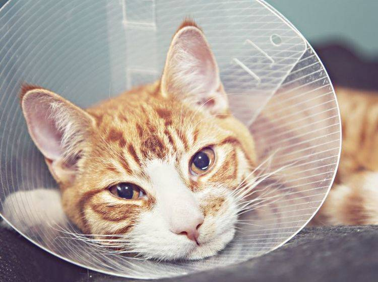 Nach der OP braucht die Katze Ruhe, Liebe und Wärme – Bild: Shutterstock / Sophie McAulay