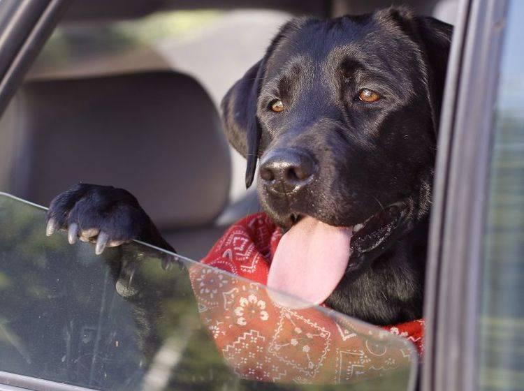 Lassen Sie Ihren Hund nie im Auto warten – Bild: Shutterstock / lenetstan