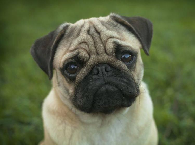 Schneckenkorn ist sehr gefährlich für den Hund – Shutterstock / Nature Art