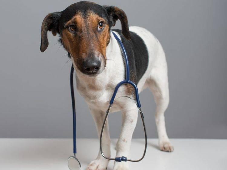 Die Bauchspeicheldrüsenentzündung ist ein Fall für den Tierarzt – Bild: Shutterstock / laszlo