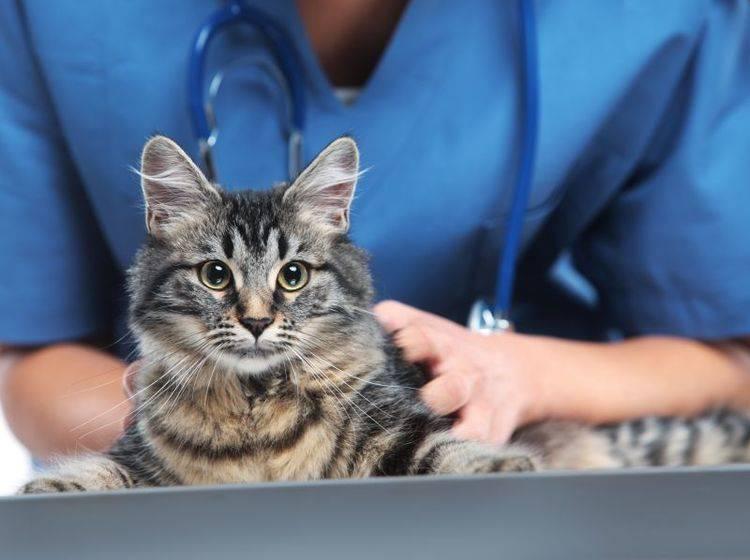 Bei Vergiftungssymptomen sollten Sie schnell einen Tierarzt aufsuchen – Bild: Shutterstock / Stokkete