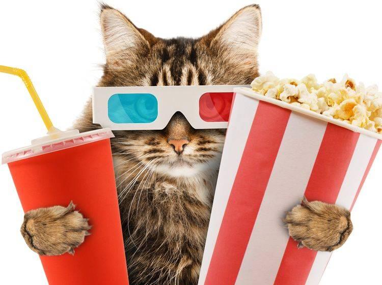 Katzen werden als Internet-Stars gehandelt – Bild: Shutterstock / FotoYakov