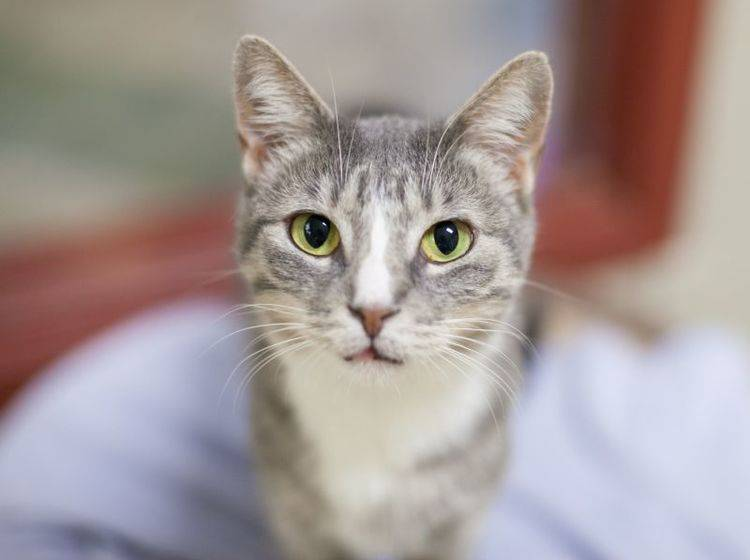 Tierheimkatze zieht ein: Die ersten Tage sind aufregend – Bild: Shutterstock / InBetweentheBlinks