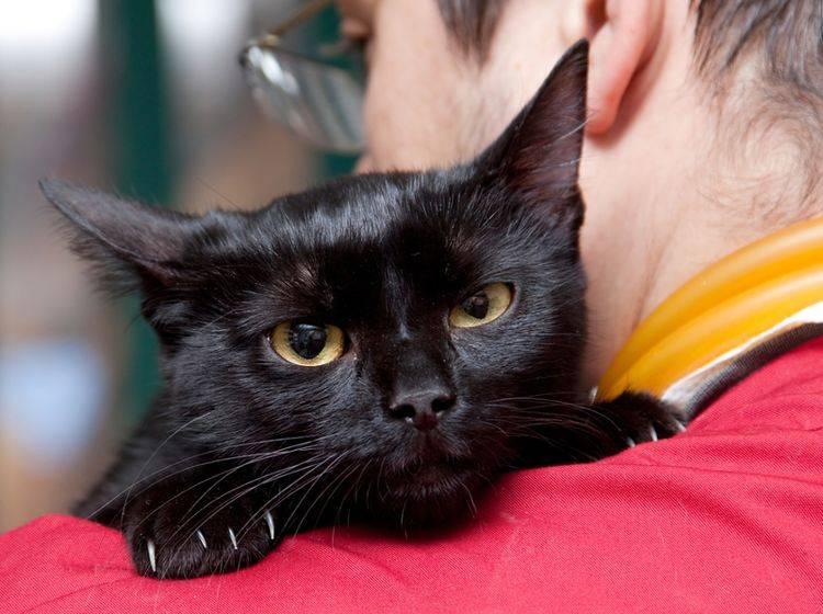 Die Krankheit FIV wird von Katze zu Katze übertragen – Bild: Shutterstock / melis