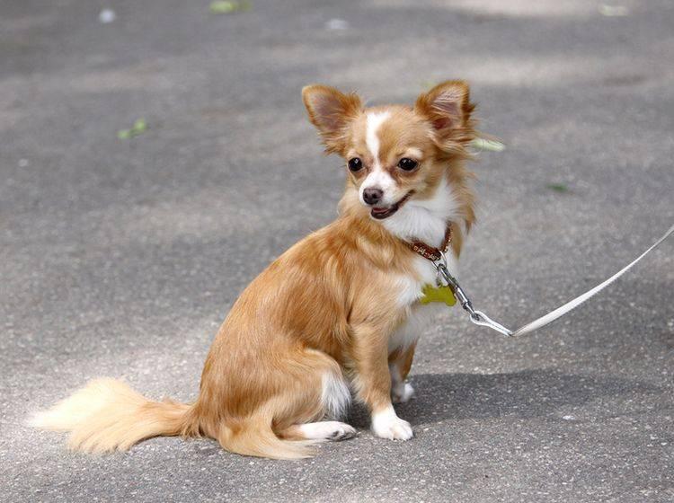 Gassigehen auf Asphalt kann im Sommer für Ihren Hund zum Problem werden – Bild: Shutterstock / Jolanta Beinarovica