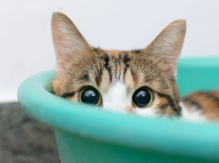 Um eine scheue Katze zutraulich zu machen, braucht es viel Geduld - Bild: Shutterstock TungCheung