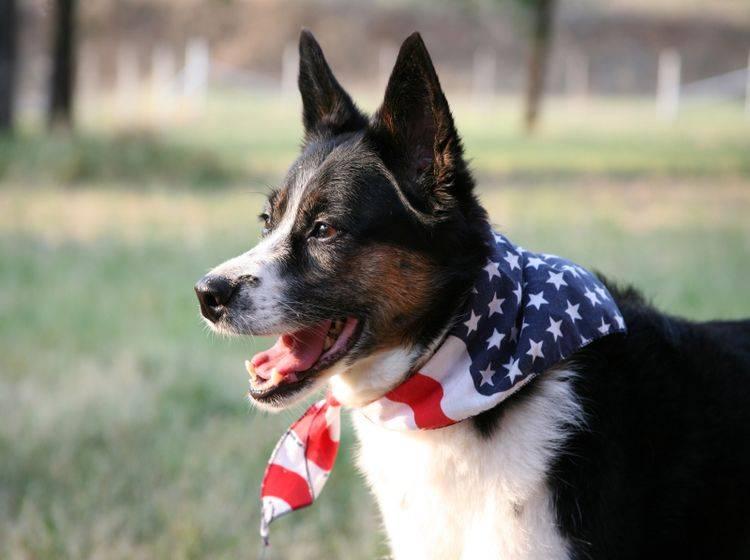 Der Hund freut sich auf den USA-Urlaub – Shutterstock / Sherri R Camp