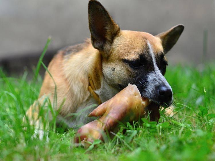Barfen ist auch im Urlaub mit Hund möglich – Shutterstock / Marek Velechovsky