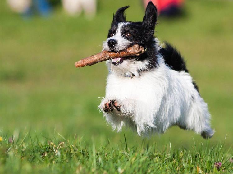 Dieser Hund hat Spaß beim Apportieren – Bild: Shutterstock / Dexter-cz