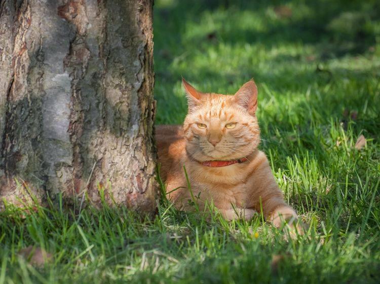 Sonne ist schön, Schatten aber auch, findet die hübsche rote Katze – Shutterstock / Steve Mann