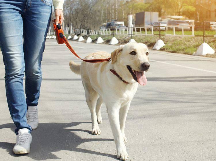 Beim Hundewesenstest wird das Verhalten des Hundes genau unter die Lupe genommen – Bild: Shutterstock / Rohappy
