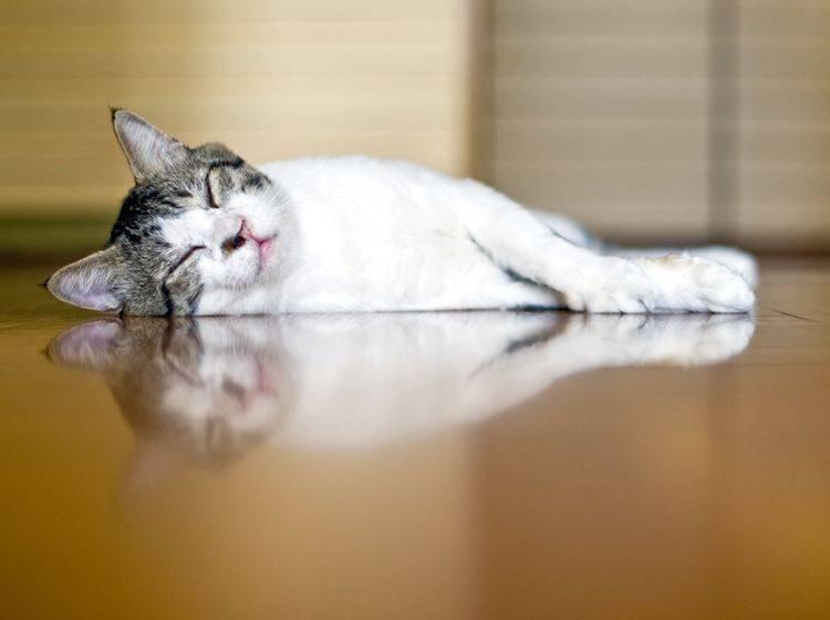 katzenfreundliche Wohnung mit gemütlichem, pflegeleichtem Fußboden – Shutterstock / kazoka