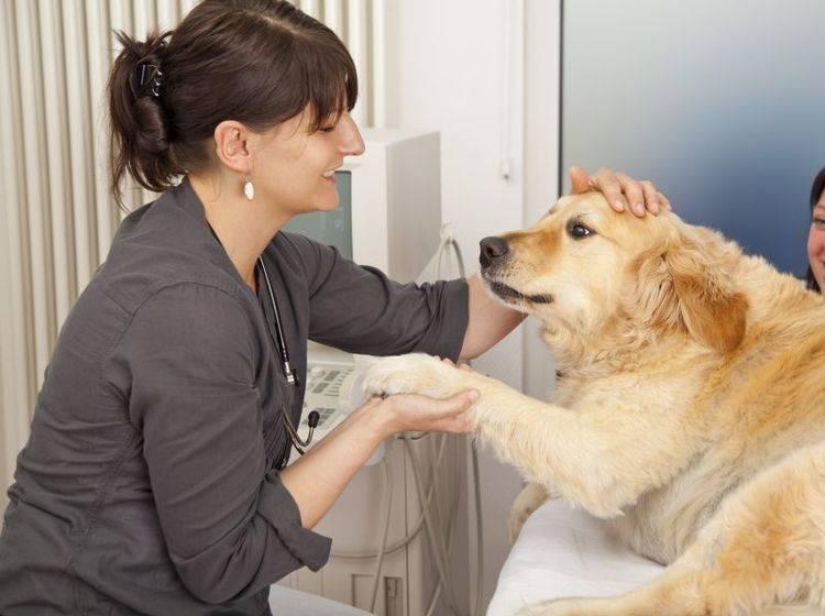 Eine Blutegeltherapie kann zum Beispiel einem Hund mit Gelenkproblemen helfen – Shutterstock / foto ARts