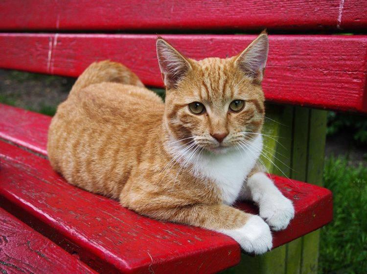 Wie alt eine Katze werden kann, hängt von vielen Faktoren ab – Shutterstock / Jumnian Pelt