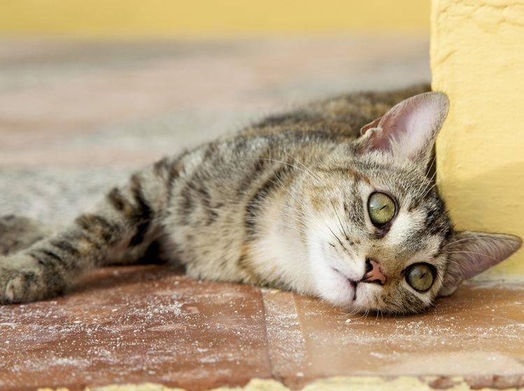 Die Symptome von Depressionen bei Katzen sind nicht immer leicht zu erkennen – Bild: Shutterstock / Chantal Ringuette