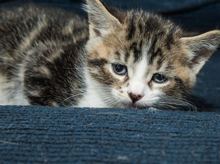 Depressionen bei Katzen können verschiedene Ursachen haben – Bild: Shutterstock / NY IMAGES