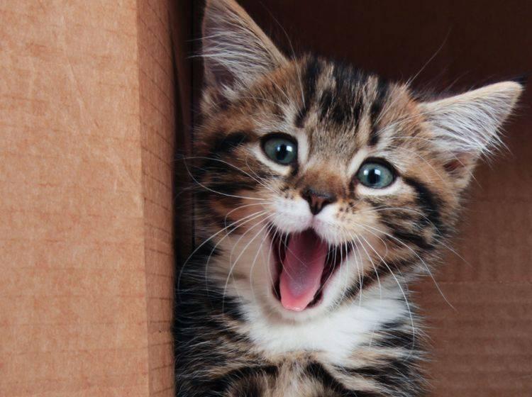 lachen garantiert verrückte und lustige katzen im porträt