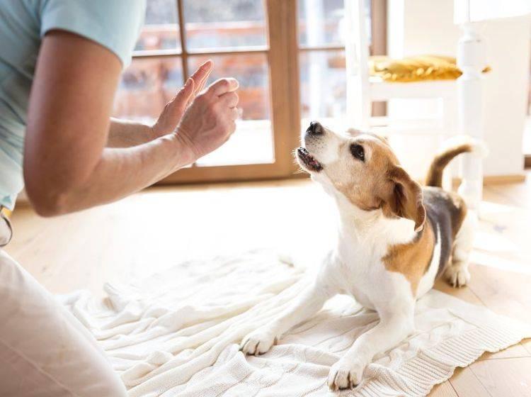 Ein Tierpsychologe hilft Hunden bei seelischen Problemen – Shutterstock / Halfpoint
