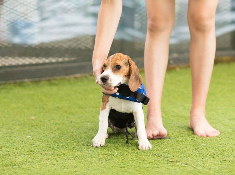 Zum Longieren mit dem Hund brauchen Sie üblicherweise keine Leine – Shutterstock / Easy Morning