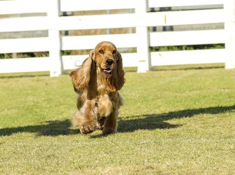 Die Übungen beim Longieren mit dem Hund sind sehr vielseitig – Shutterstock / f8grapher