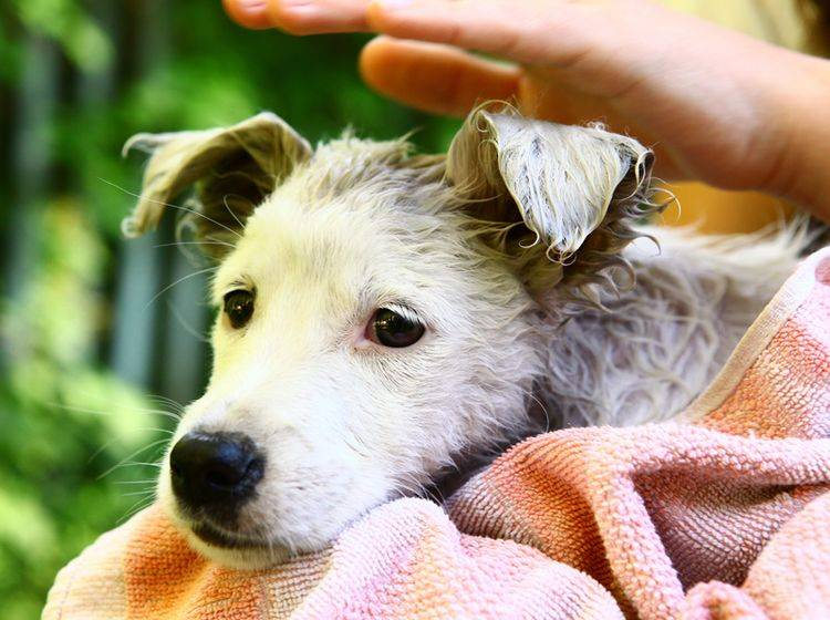 So ein zuckersüßer Findelhund! Darf man ihn behalten? – Shutterstock / Lapina