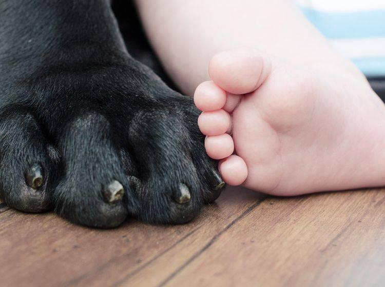 Hund und Baby können mit der richtigen Vorbereitung tolle Freunde werden – Shutterstock / jill_erin